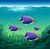 Ocean fish. Beautiful fish swimming under the ocean stock illustration