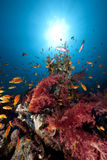 Ocean,fish and coral Royalty Free Stock Images