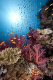 Ocean,fish and coral Stock Photography