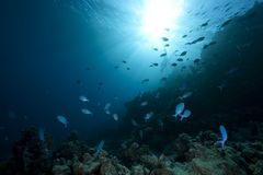 Ocean,fish and coral Royalty Free Stock Photography