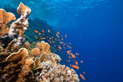 Ocean, fish and coral Royalty Free Stock Photo