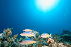 Ocean, fish and coral royalty free stock photos