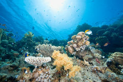 Ocean, fish and coral Royalty Free Stock Images