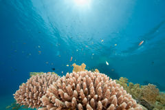 Ocean, fish and coral Royalty Free Stock Photography