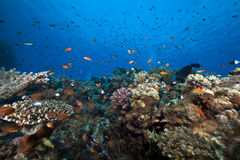 Ocean,fish and coral taken in the Red Sea. Royalty Free Stock Images