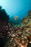 Ocean,fish and coral taken in the Red Sea. Royalty Free Stock Image