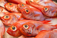 Ocean fish on ice Stock Photo