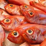 Ocean fish on ice Stock Photos
