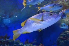 Ocean fish Stock Photography
