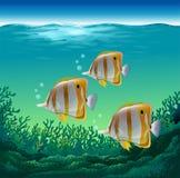 Ocean fish. Swimming under the sea vector illustration