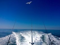 Ocean Fishing Summer Day on the Open Ocean. Seagull above boat royalty free stock images
