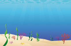 Ocean floor sea bed Stock Photos