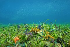 Ocean floor with sea grass and colorful sponges Royalty Free Stock Photography