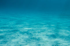 Ocean Floor underwater Royalty Free Stock Image