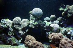 Ocean flora royalty free stock photos