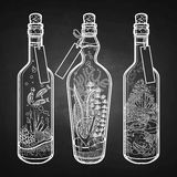 Ocean flora and fauna in bottles. Royalty Free Stock Images