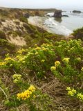 Ocean flowers in Morro Bay Royalty Free Stock Photography