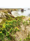 Ocean flowers in Morro Bay Stock Images