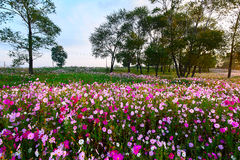 The ocean of flowers Stock Images