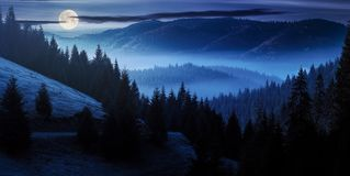 Ocean of fog in forested valley at night. In full moon light. gorgeous panoramic landscape in autumn mountains. spruce trees lit by rising sun stock photo