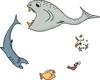Ocean Food Chain Cartoon. Cartoon of ocean food chain over white background Royalty Free Stock Photo