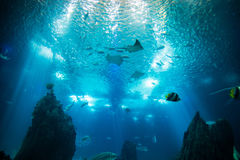 Ocean giant fish world in aquarium for observation. Ocean giant fish world in aquarium for observation in Lisbon stock image