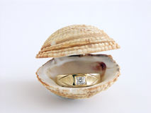 Ocean gift. Diamond engagement ring sitting in spread shell stock photography
