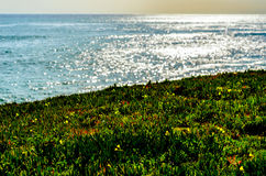 Ocean glare. Glare off the ocean with plant foreground Royalty Free Stock Photography