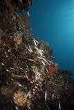 Ocean, glassfish and barracudas Stock Photo
