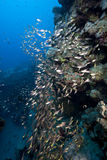 Ocean and golden sweepers. Taken in de red sea Stock Images