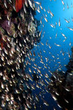 Ocean and golden sweepers Royalty Free Stock Photos