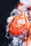 Ocean gourmet dinner background - Fresh raw shrimps Royalty Free Stock Photos