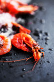 Ocean gourmet dinner background - Fresh raw shrimps. Ocean gourmet dinner background - Fresh raw shrimp Royalty Free Stock Photography