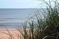 Ocean Grass. Beach grass on a sand dune overlooking the ocean royalty free stock photography