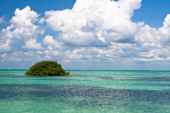 Ocean of green leaves in blue ocean Royalty Free Stock Photography