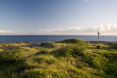 Ocean greenery. Ocean and foliage landscape Stock Photography
