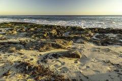 Ocean Indyjski zimy burz exposé gałęzatka i skały fotografia stock
