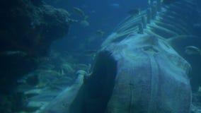 Ocean istot widok zbiory