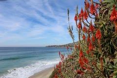 The ocean in Laguna Beach. Heisler Park, Laguna Beach, California, steps with red hot poker plants (Kniphofia uvaria), fall Royalty Free Stock Photos