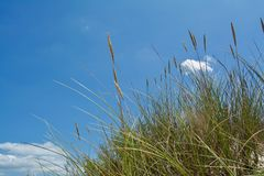 Sunny Beach with Sand Dunes and Blue Sky. Ocean. Ocean landscape with beach sea view, sand dune and grass, blue sky with clouds royalty free stock photos