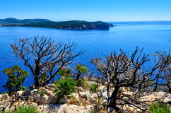 Ocean landscape with dry trees and bushes, Sardinia Royalty Free Stock Image