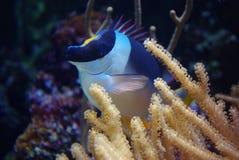Ocean life Stock Image