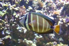 Ocean life Stock Photo