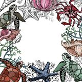 Ocean life background with sea organisms, shells, fish, corals, and turtle. Hand Drawn vector illustration Stock Photography