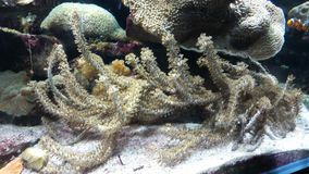 Ocean Life Royalty Free Stock Photo