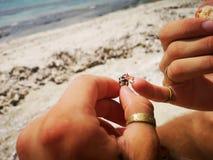 Ocean life tiny crab stock photos