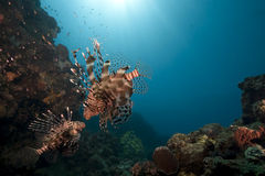Ocean and lionfish Stock Image