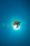 Ocean, lionfish and sun Royalty Free Stock Photo