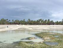 Ocean at low tide. African coast of the Indian ocean at low tide. Zanzibar royalty free stock images