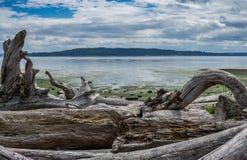 Ocean Low Tide Landscape 3 Stock Photography